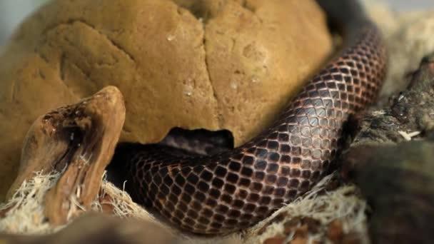 mazlíček had nora ve své skleněné kleci