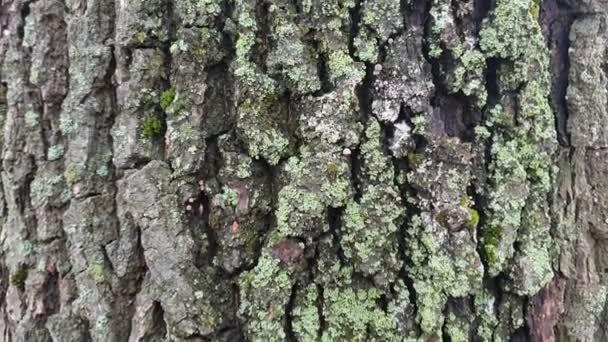 Neobvyklé proplétání větví na starém padlém stromě v lese