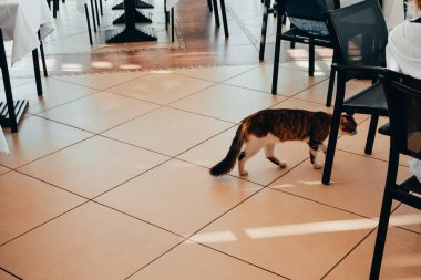 cat at restaurant