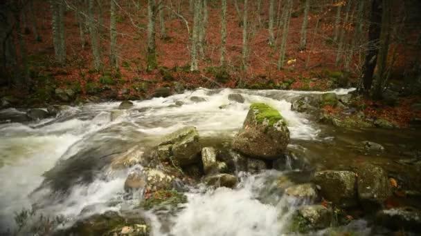 Egy magas hegyi folyó a bükkösök között ősszel, vízesés