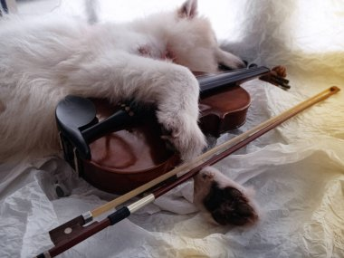 Violin was hug by cute dog  leg on grunge surface background