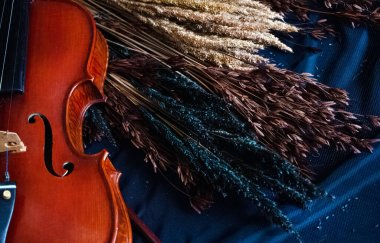 Group of dried flower put beside half violin front side, on grunge surface background,vintage and art tone,classic style,blurry light around