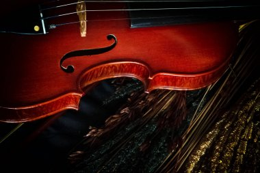 Half of violin front side put on blurred flower,vintage and art tone,classice style,blurry light around