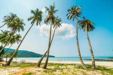 Beautiful tropical beach and sea with coconut palm tree in parad