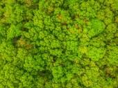 Krásný pohled přírody stromů v lese