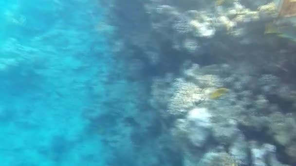 Podvodní střílení ryb a útesu v červeném moři