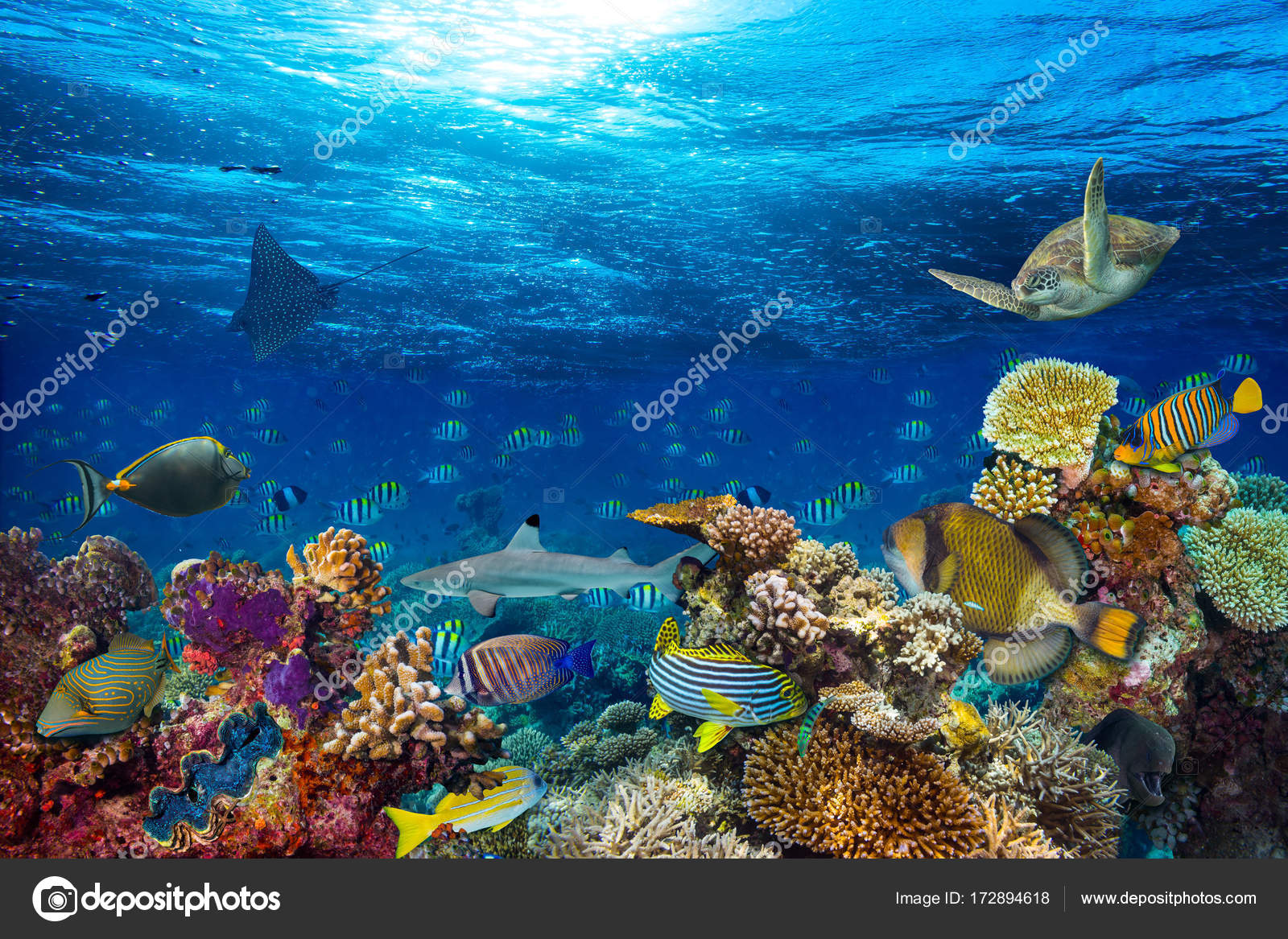 Underwater Coral Reef Landscape Background Deep Blue