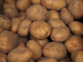 Hromada organických brambor ležících na tácu