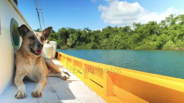 Pes se těší na jízdu lodí