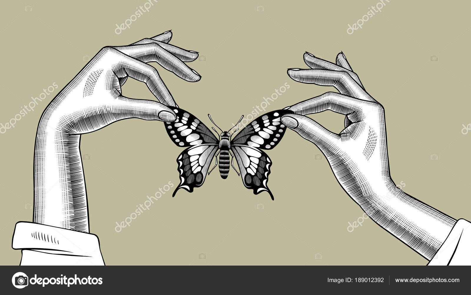 Manos de mujer sosteniendo una mariposa en los dedos — Archivo ...