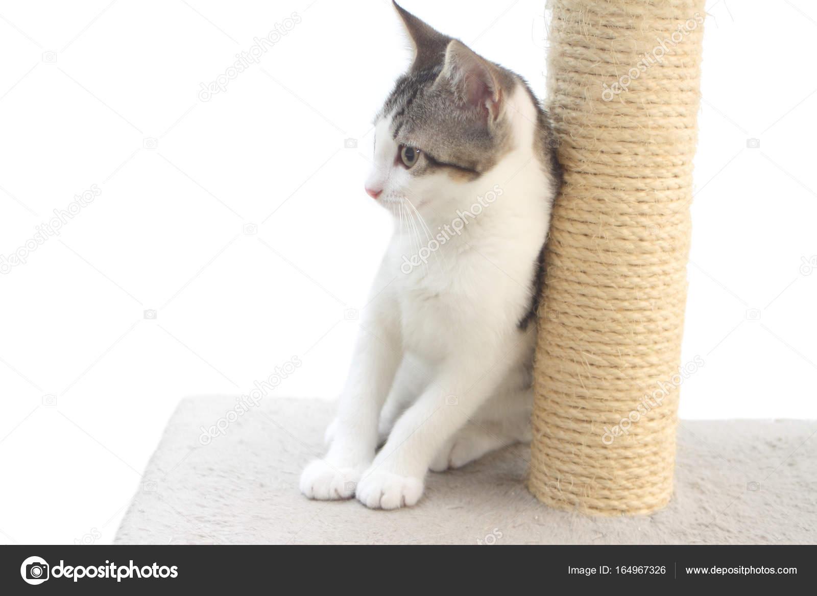 Tabby Kitten Auf Der Kratzbaum Stockfoto Rossella71 164967326