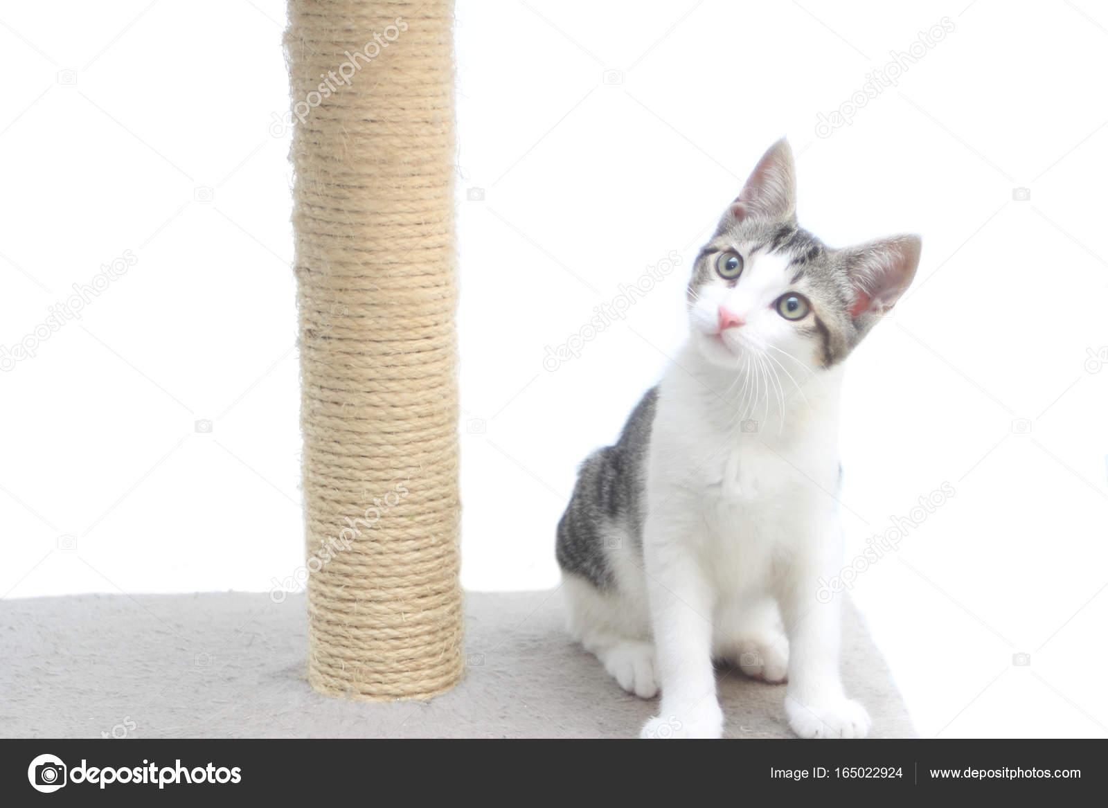 Tabby Kitten Auf Der Kratzbaum Stockfoto Rossella71 165022924