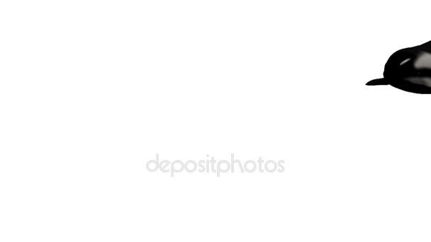 Balena di assassino, nuoto con i suoi figli isolati su bianco