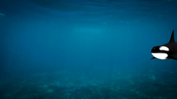 Balena di assassino, nuotare in un mare con i suoi bambini