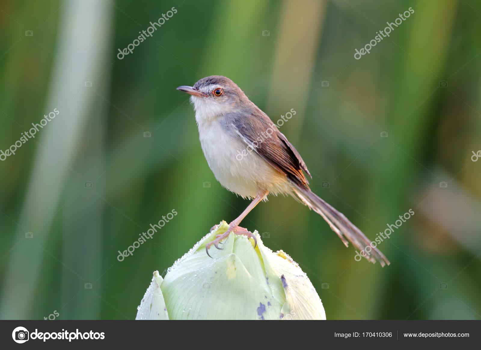 Απλά πουλί εικόνες