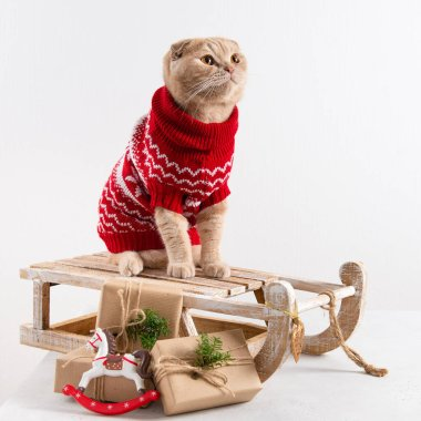 Cute cat in knitted scarf on the sledge with presents on white background. Chritmas, New Year shopping, sale concept. Copy space for text stock vector