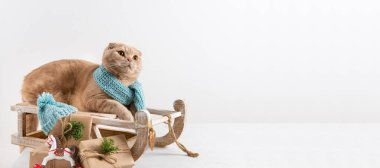Cute cat in knitted scarf on the sledge with presents. Pet shop, christmas, new year sale banner. Copy space for text stock vector