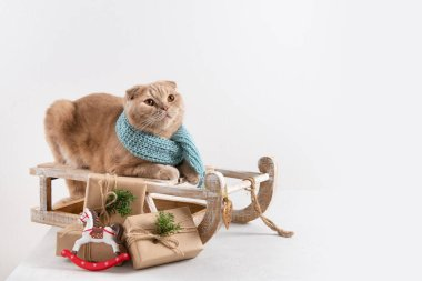 Christmas shopping. Sledge with Christmas presents and cute cat on white background. Copy space for text stock vector