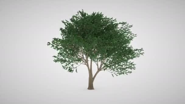Zöld széles lombozatú fa