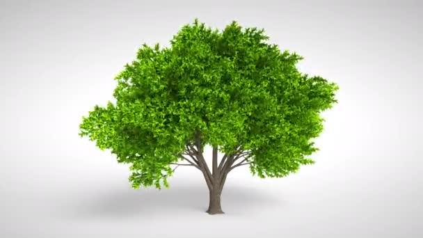 Strom se zeleným širokým listím