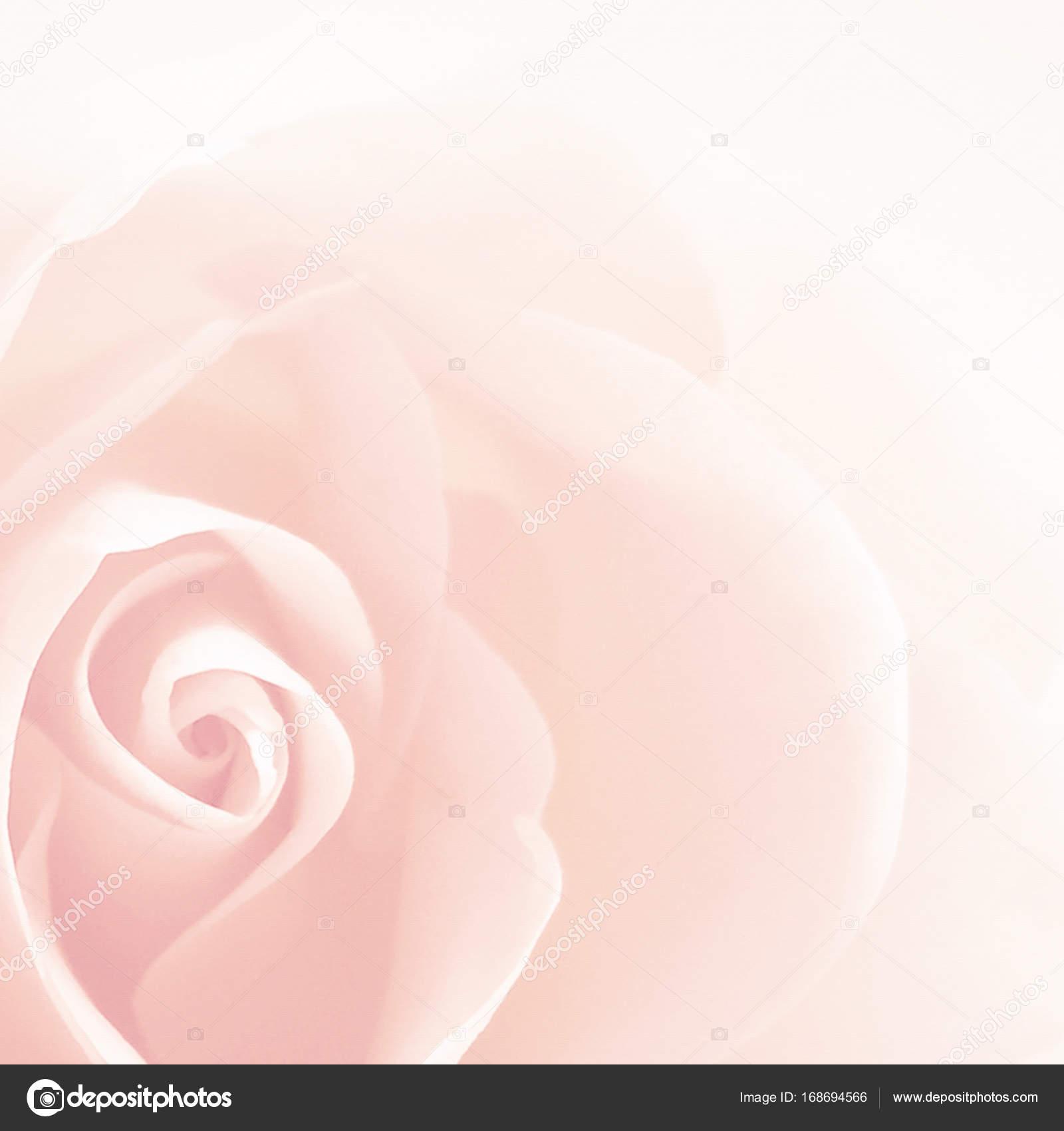 Soft Rose Background Vintage Stock Photo