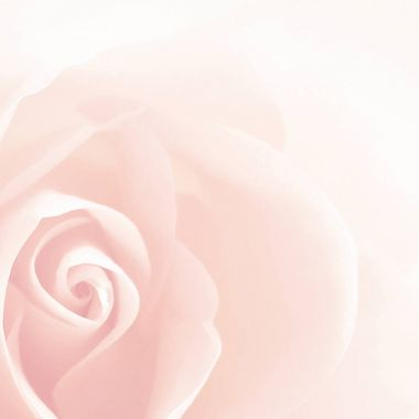 Soft rose background vintage