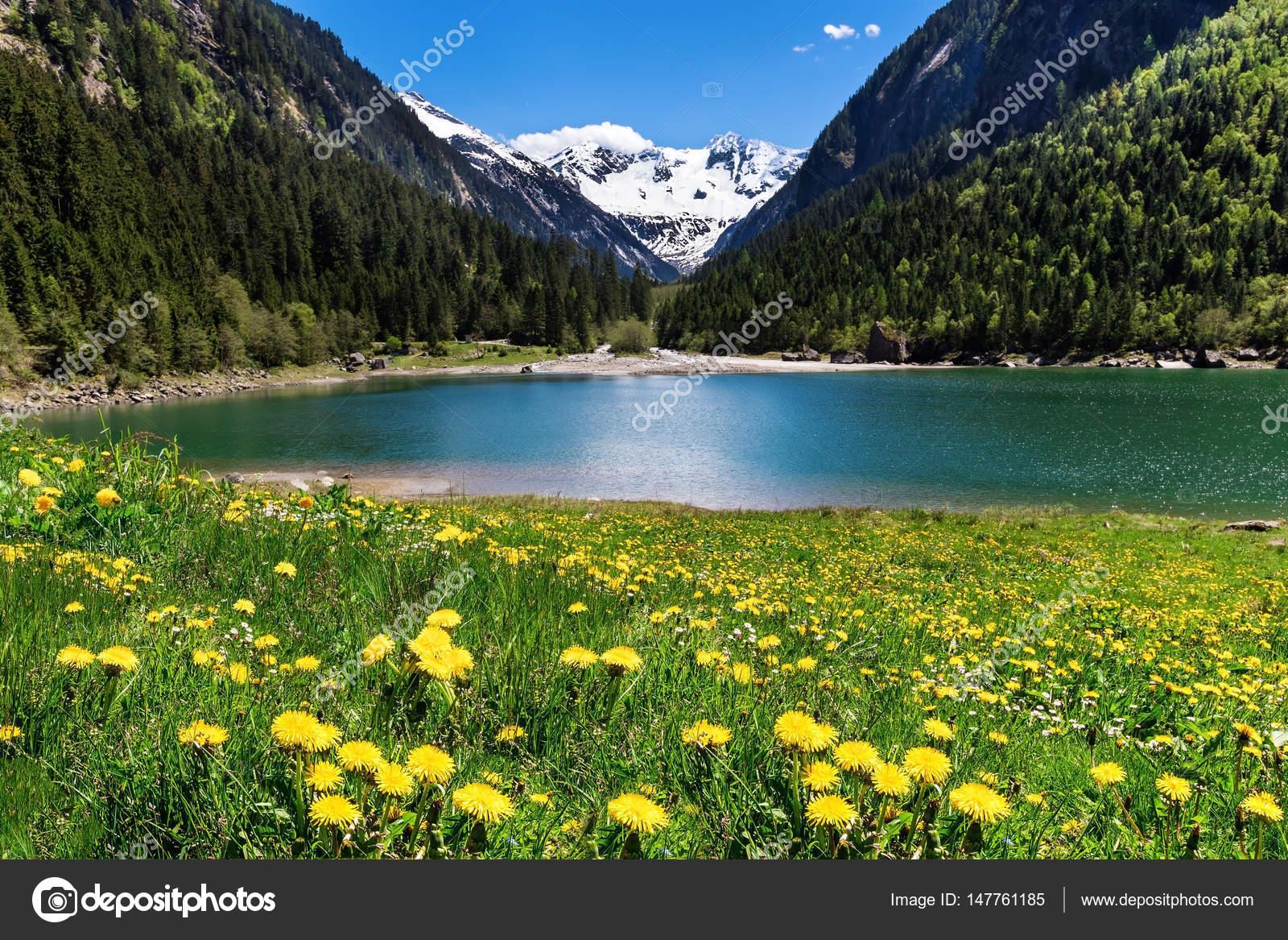 Splendido paesaggio di montagna con i fiori di lago ed il for Disegni di laghi