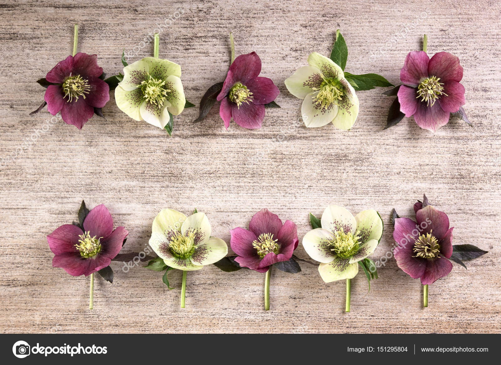 Purple White Spring Flowers On Light Brown Rustic Background Top