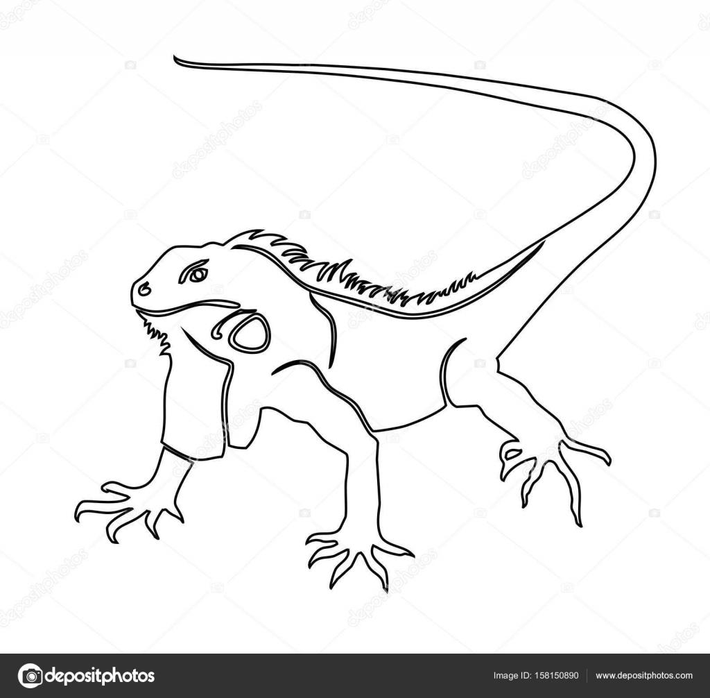 Iguana Boyama Kitabı Vektör çizim Stok Vektör Ladybirdannad