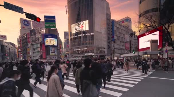 Pan video of crowd waiting and crossing at the Shibuya Intersection at sunset