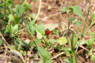 Lady Bug Life