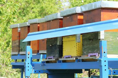 Bee hives and honey