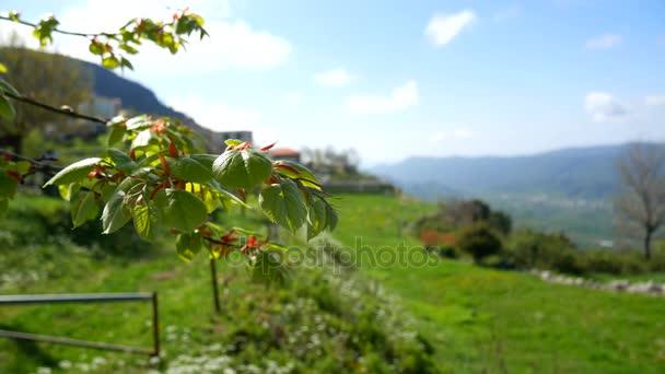 Weide Fur Die Tiere In Den Bergen Blumen Und Pflanzen In Mont