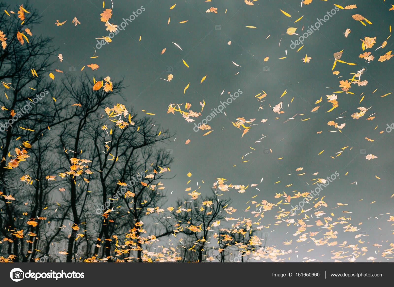 осенние листья на воде фото