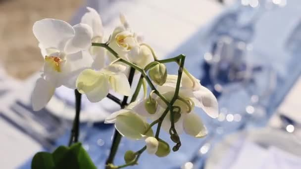 Flowers white orchid, flowers bloom and bloom