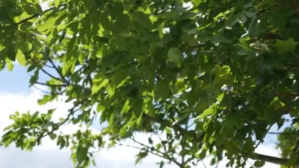 La nature du mont n gro plantes fleurs arbres for Arbres plantes fleurs