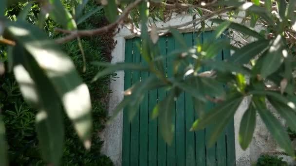 Grüne Türen. Holzstruktur. alte schäbige, verstrahlte Farbe