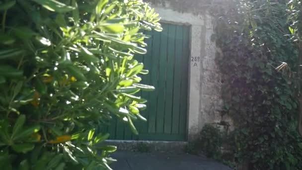 Grüne Türen. Holzstruktur. Alte shabby, bestrahlte Farbe
