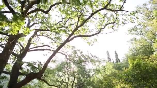 Az utat az erdőben. Az út az erdőn keresztül, fut a