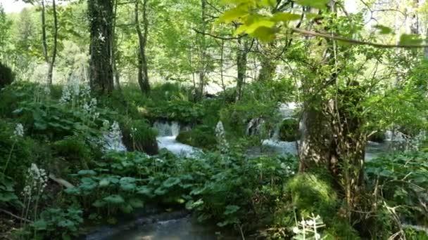 Malé vodopády mezi stromy na Plitvických jezerech v národním parku v Chorvatsku. Hustě zelený jarní listnatý les.