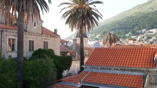 Kuppel der katholischen Kathedrale Mariä Himmelfahrt in Dubrovnik, Kroatien. Blick von der Stadtmauer durch hohe Palmen bei Sonnenuntergang.