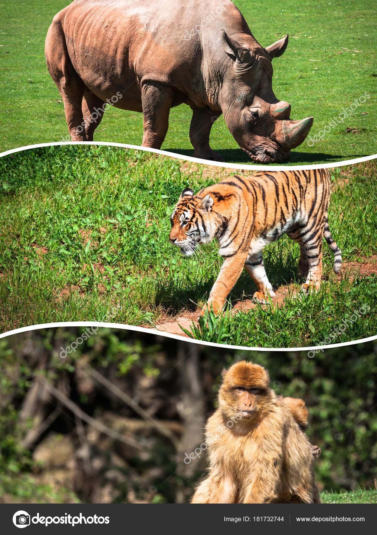 Collage Wild African Animals Stock Photo