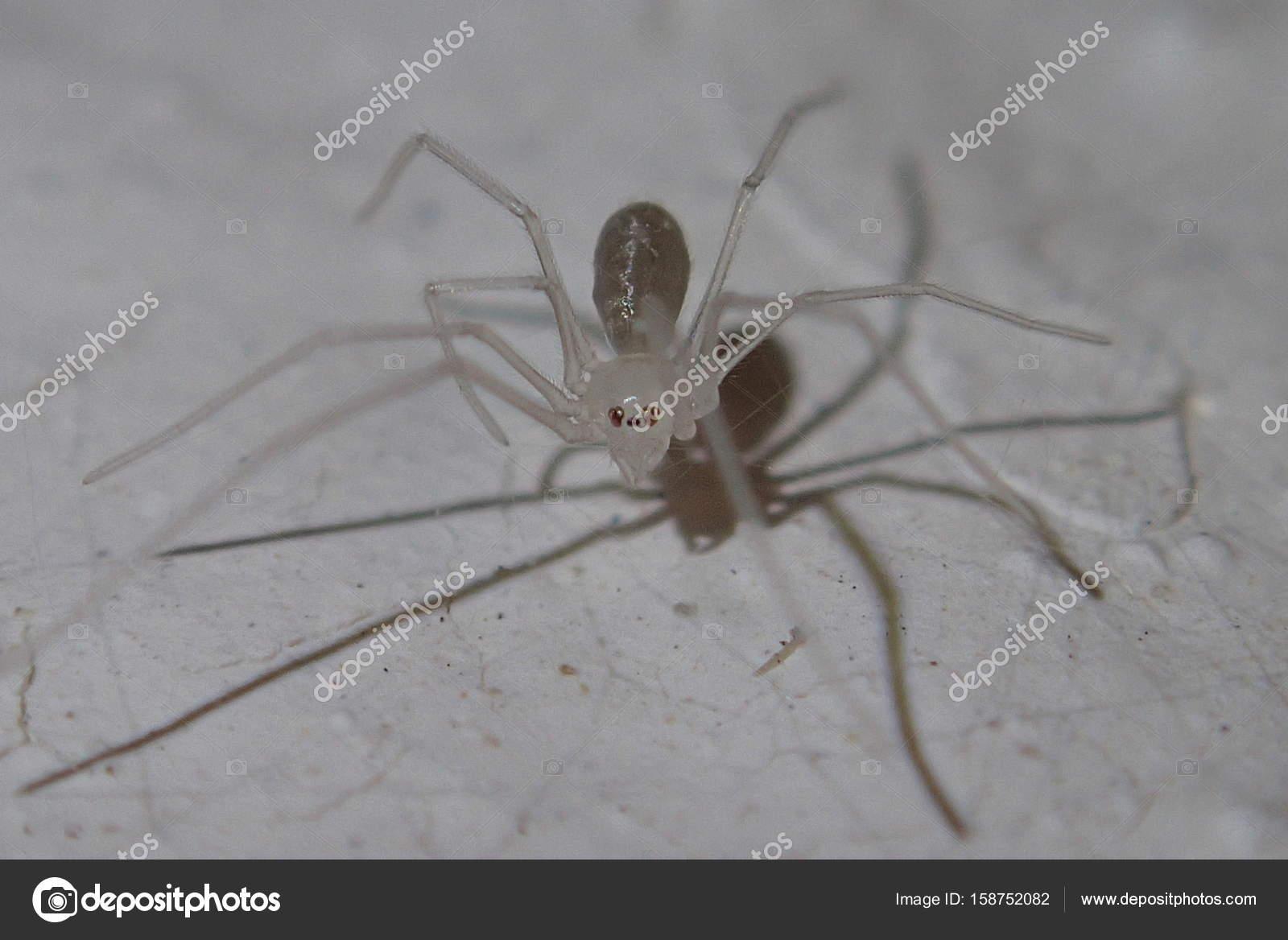 Baby-Schädel-Spinne — Stockfoto © JakeE #158752082