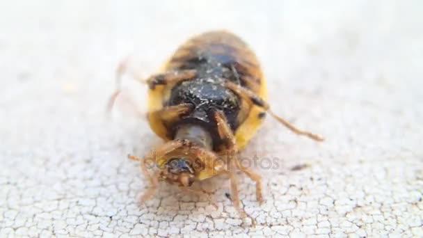 Žlutá Beruška obrací na své nohy a opuštění rámce