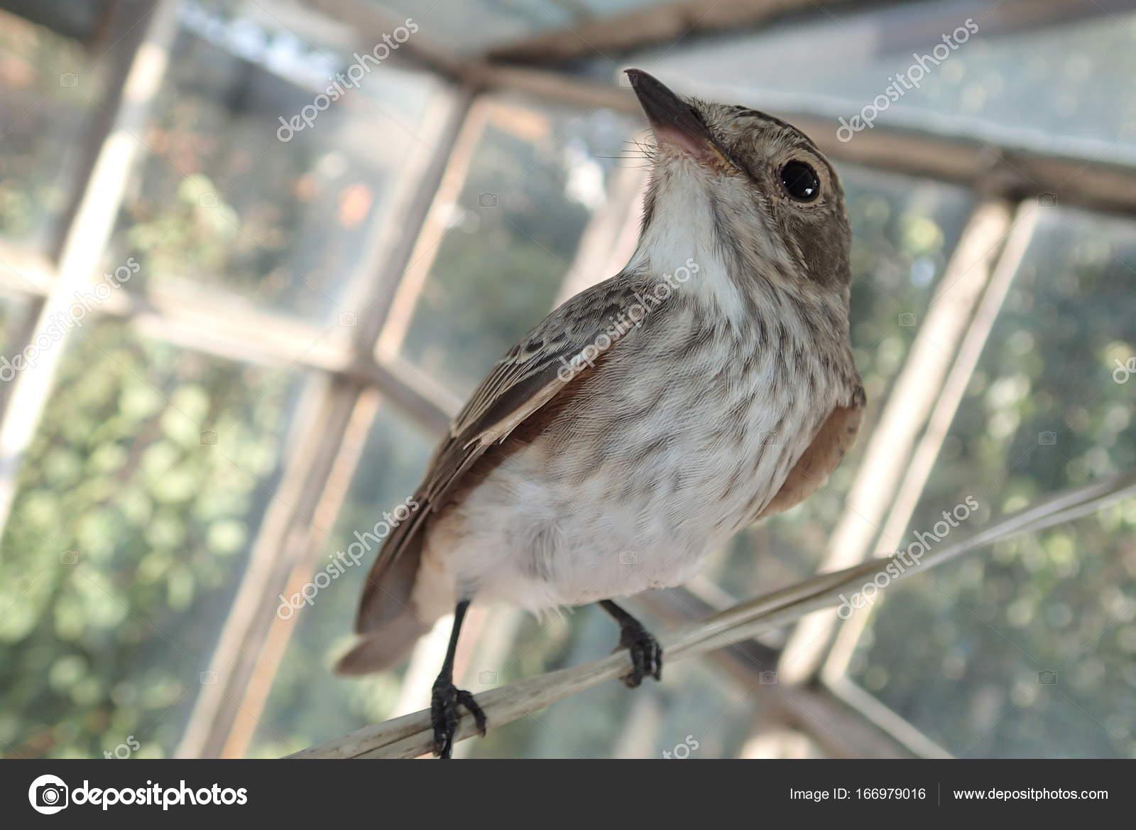 můj pták obrázek