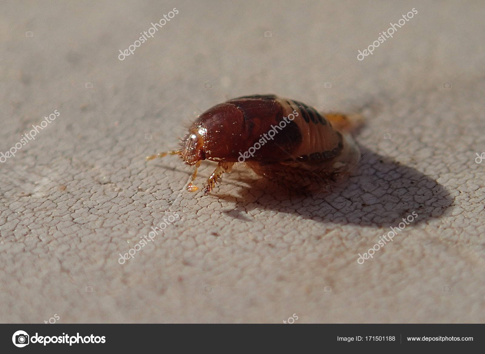 foto de inseto larva
