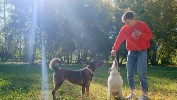 A young woman in a red sweater is playing with her dogs.