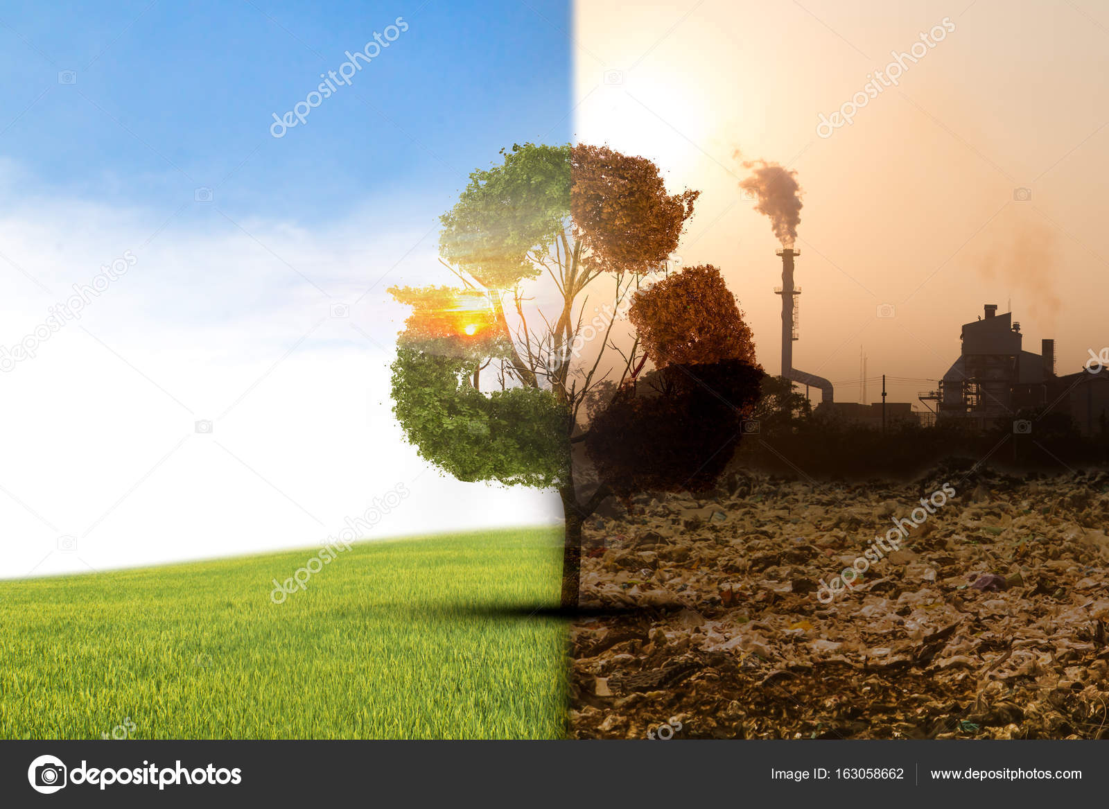Concept Climate Has Changed Half Alive Half Dead Tree Standing