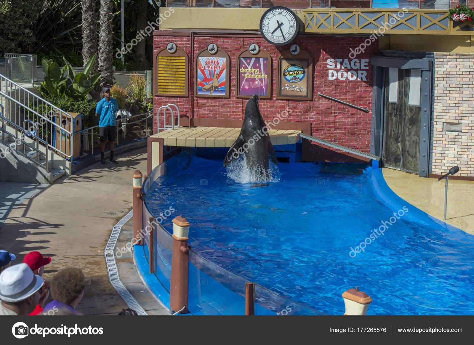 San Diego Usa November 15 2015 The Sea Lion Show At