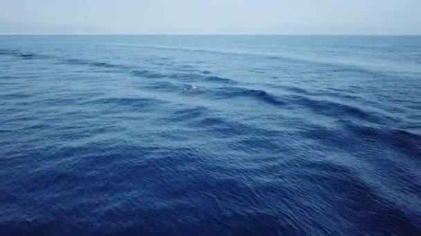 pruhované delfíni při skákání v hlubokém modrém moři letecké video záběry drone
